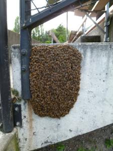 Bee Swarm Wall