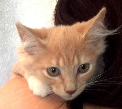 Cat Adoption Seattle Event