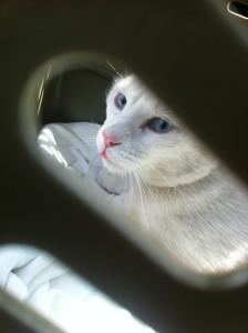 binky in cat box