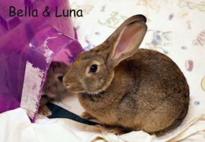 Bella & Luna