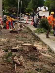 Boston Tree removal