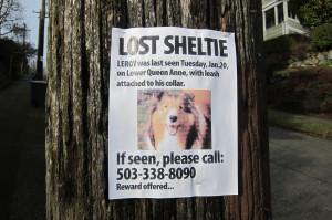 Lost Dog sheltie