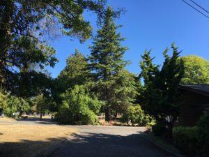 Mt Pleasant Cemetery entrance