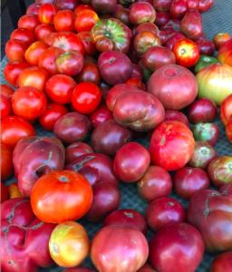 QAFM Tomatoes crop